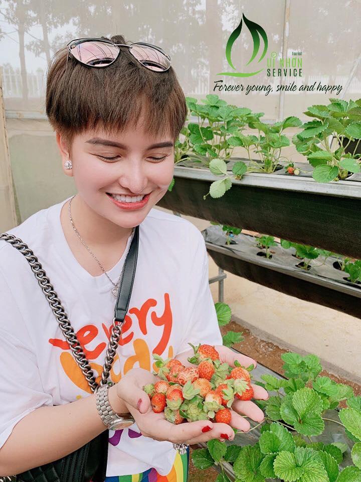 Tourists Of QNS Tourist Picking Strawberry At BB Farm - Van Hoa Highlands Tour