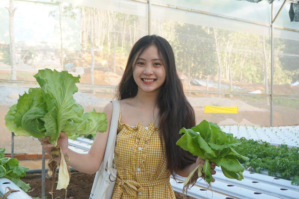 Guest QNS Pick Vegetables BB Farm