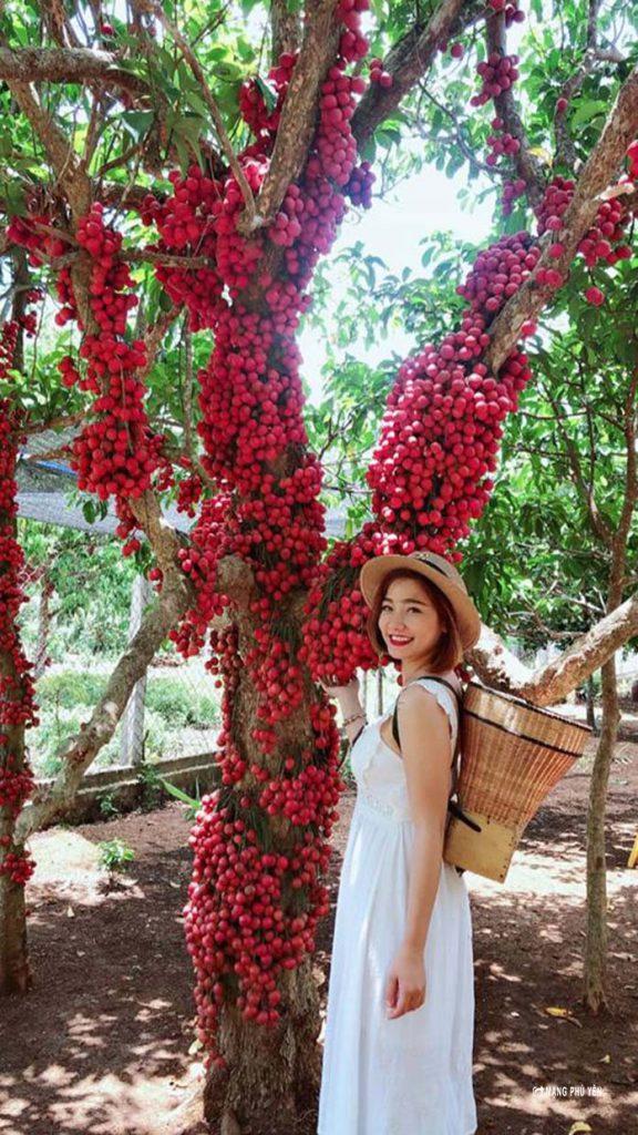 Red Garden In Van Hoa Plateau - Van Hoa Highlands Tour From Quy Nhon